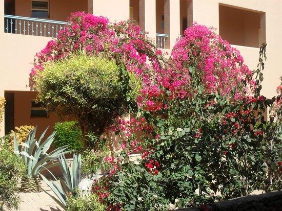 Labranda Club Paradisio Hotel El Gouna: Üppige Bepflanzung