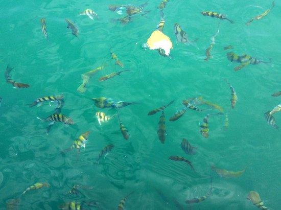 Aseania Resort Pulau Besar : Beautiful fishes