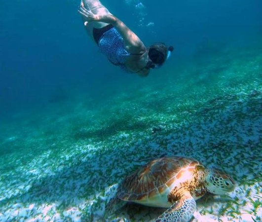 Reef Friendly Tours: Sea Turtle