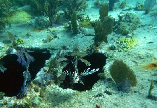 Reef Friendly Tours: Lionfish on the barge