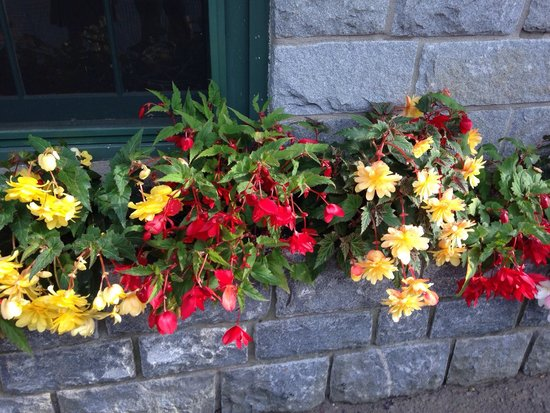 Mitchell's Lodge & Cottages: Begonias around the lobby.  They trim and keep them at their best!