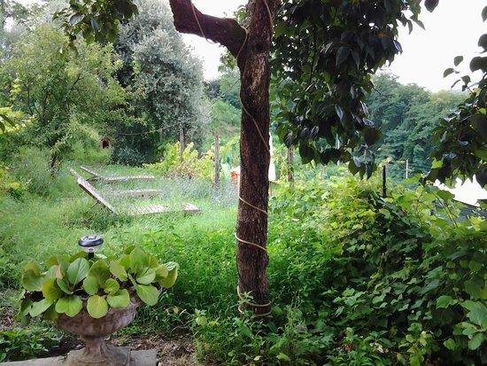 Agriturismo Cerrolungo: not cared gardens