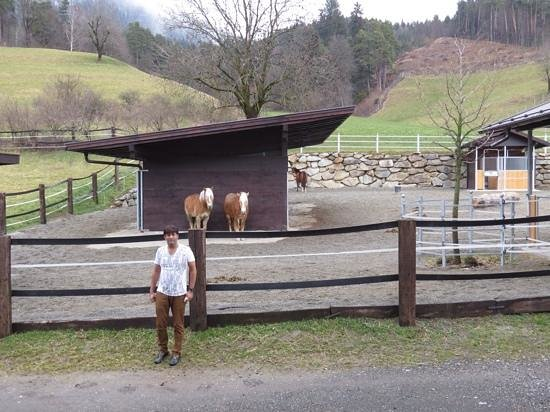 Hotel Innsbruck : my love imran at his dream stud farm near hotel innsbruk ** must see it