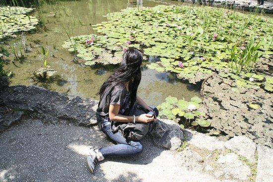 Ile Marguerite : giardino giapponese