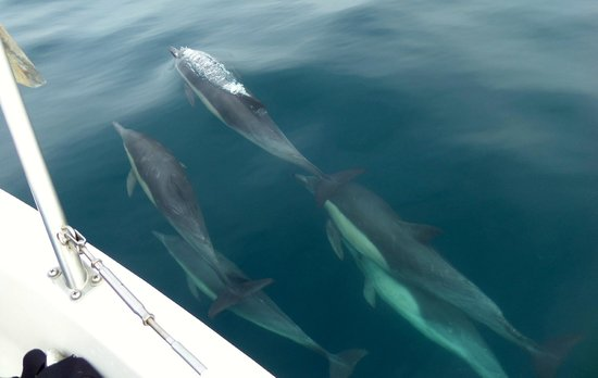 Red Anchor Charters: The dolphins were amazing, so fun to see them this close!