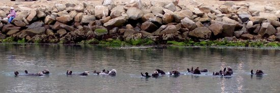 Red Anchor Charters: My daughters were very excited to see the otters