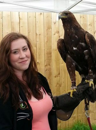 York Bird of Prey Centre: Shadow the golden eagle.