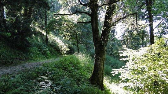 Parador de Limpias: el bosque que le rodea