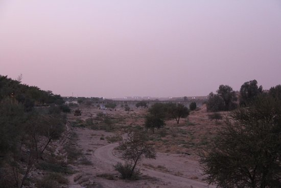 Wadi Hanifah : pretty much the only place plants grow naturally in the area around riyadh