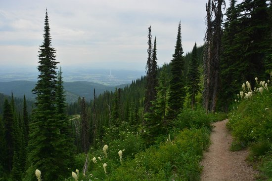 Whitefish Mountain Resort: The Danny On Trail from about halfway up.
