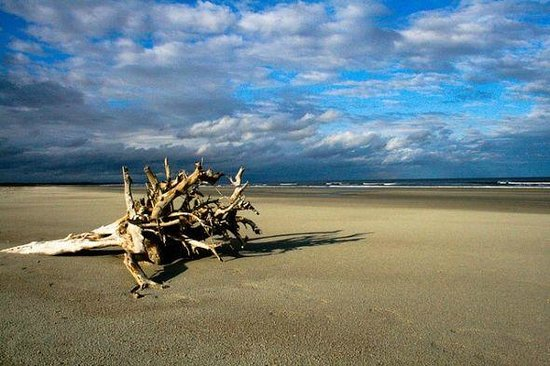 Riverview Hotel: Driftwood on Cumberland Island
