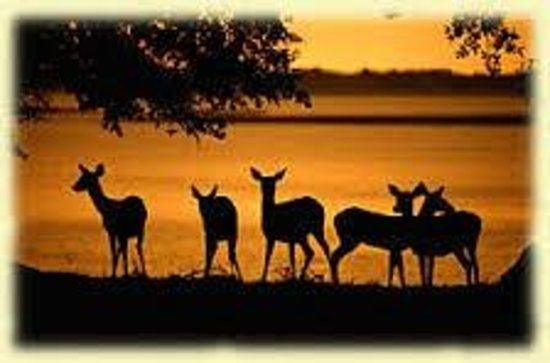 Riverview Hotel: Deer on Cumberland Island