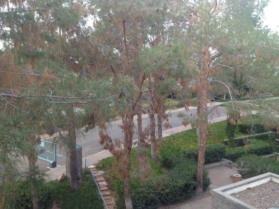 Hyatt Regency Scottsdale Resort and Spa at Gainey Ranch: Regency Club room view