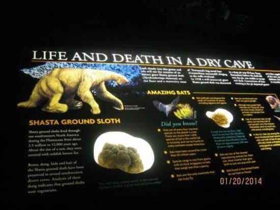 Arizona-Sonora Desert Museum: The Cave