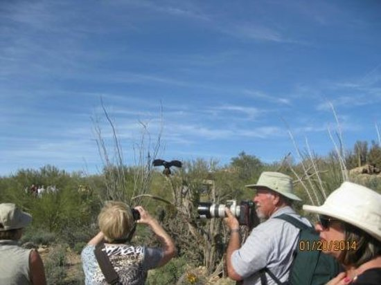 Arizona-Sonora Desert Museum: Birds of Prey show