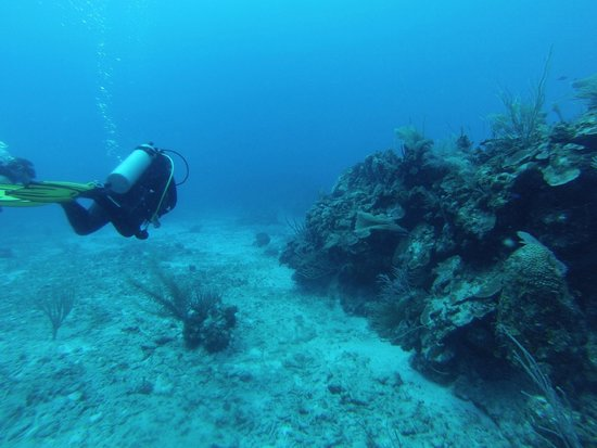 Blue Experience Diving : 2014