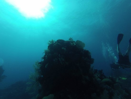 Blue Experience Diving: 2014