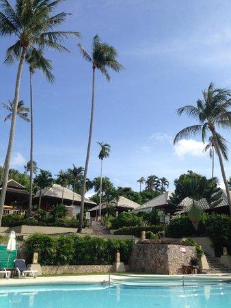 Centara Villas Samui: ชอบมะพร้าวเยอะดี