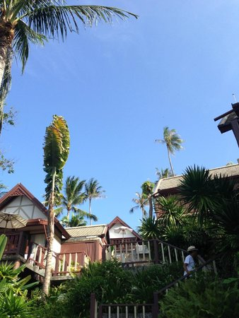 Centara Villas Samui: ทางเดินลงไปสระว่ายน้ำ ทานอาหารเช้า ต้นไม้เยอะ บรรยากาศดี