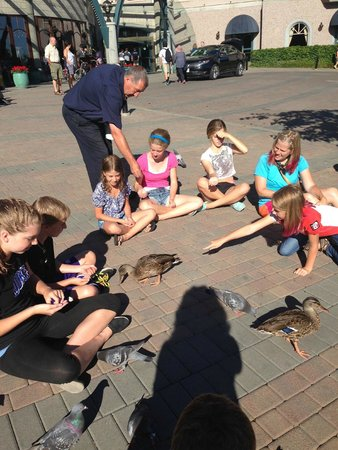 "Hotel Grand Pacific: Joe the ""duck man"" and guests feeding the ducks and pigeons"