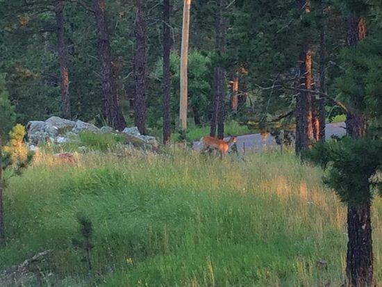 Buffalo Rock Lodge: Marilyns 'pet' deer