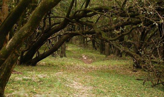 Termas de Guaychú: reserva natural