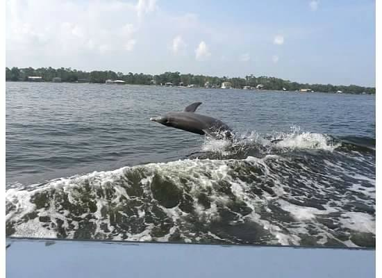 Southern Rose Parasailing And Dolphin Cruises Wow On The Cruise