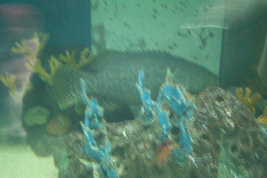 Underwater World Langkawi: Underwater World