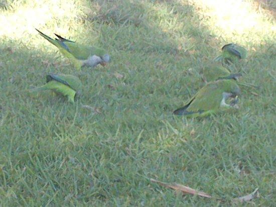Playa de La Malagueta: попугаи на пляже