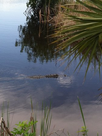 Capt Mitch's - Everglades Private Airboat Tours: postcard perfect!
