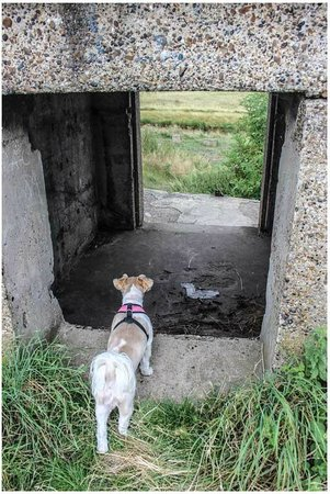 Coalhouse Fort: Bailey wanted to explore too