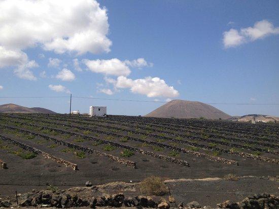 Hesperia Lanzarote: Countryside
