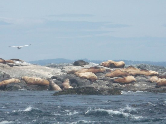 Eagle Wing Whale Watching Tours: Sea Lions