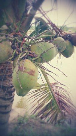 Water Coconut Homestay - Villa : 庭にあるフルーツ
