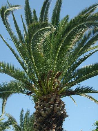SENTIDO Phenicia: Palme