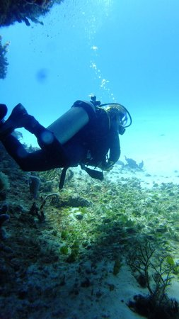 Reef Quest Divers : Neil doing what he does best