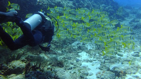 Reef Quest Divers : Neil gliding through the fish