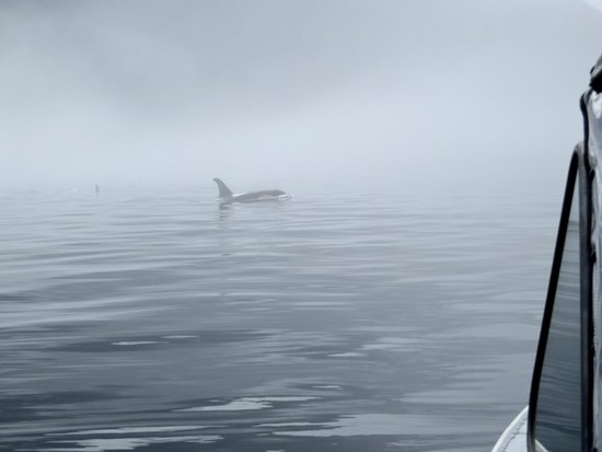 ELES ESCAPE B&B by the SEA: Resident Orca out of the mist