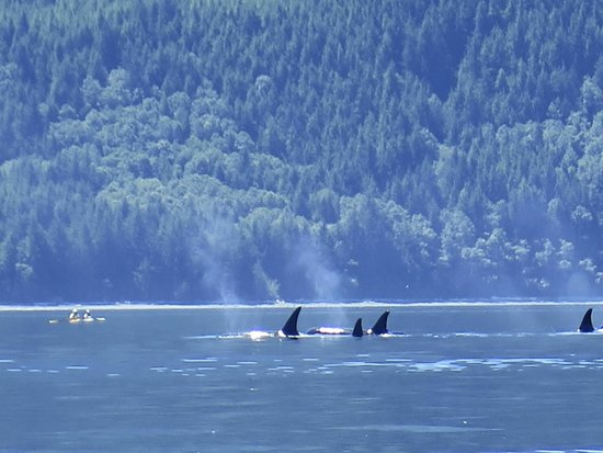 ELES ESCAPE B&B by the SEA: Family of Orcas