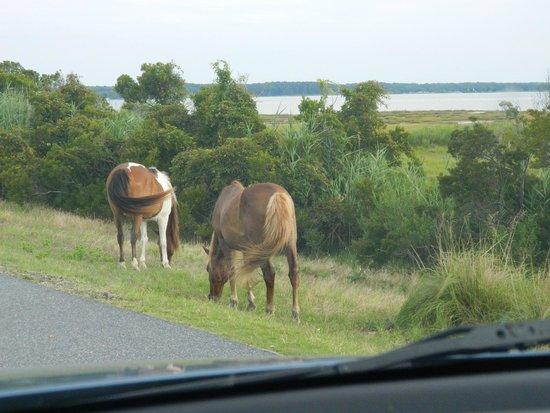 Assateague State Park: Wild ponies