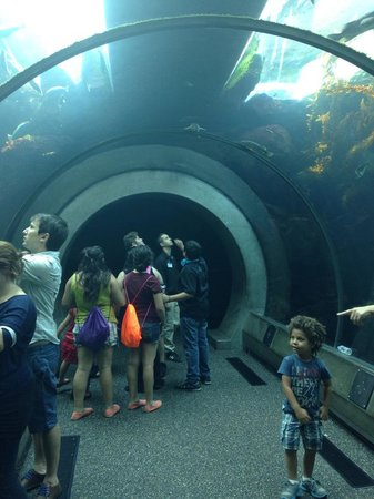 California Science Center: underwater viewing tunnel