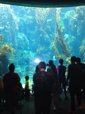 California Science Center: floor to ceiling viewing of the kelp tank
