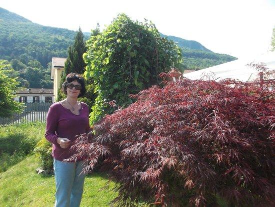 Il Canneto: in the garden