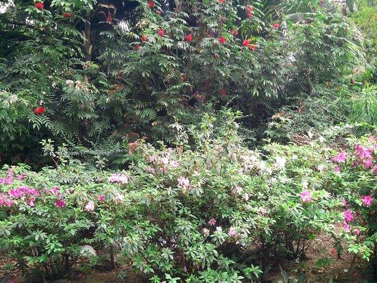 Kowloon Park: зелень в парке