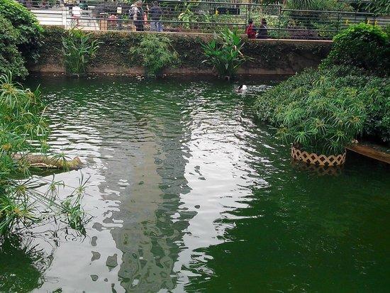 Kowloon Park: пруды