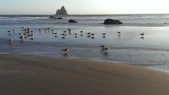 Spindrift Motor Inn: Seagulls on the Beach