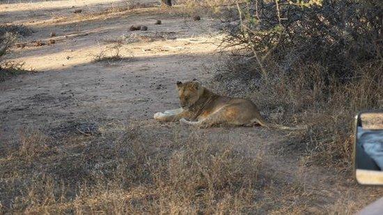 Kapama Southern Camp: Lioness