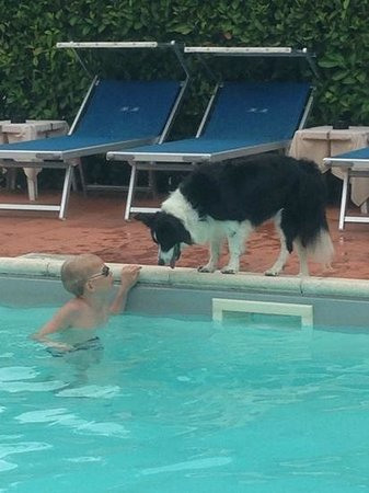 Hotel Benaco : the hotel dog