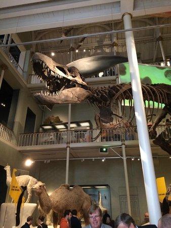 Museo Nacional de Escocia: En av utställningarna