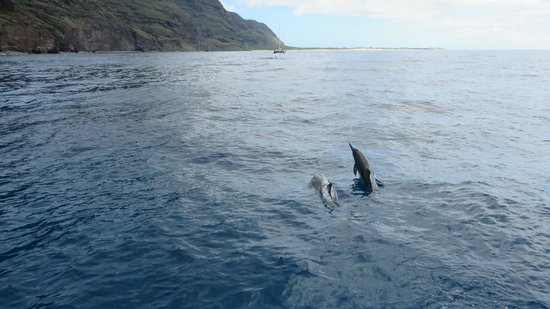 Poipu Kapili: Dolphins